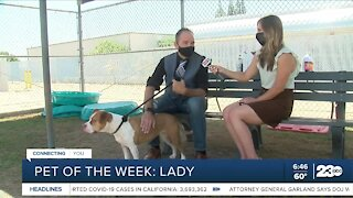 Pet of the Week: Lady