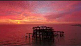 Stær i fantastisk flukt i solnedgang i England