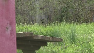 Memory garden to honor victims of violence