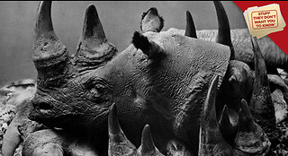 Stuff They Don't Want You to Know: Why can't we stop poachers?