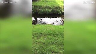 Cão escorrega ao tentar sair do rio