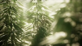 360: Cities in Colorado consider allowing marijuana delivery