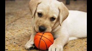 Puppy Playing Basketball🏀  Cute puppy
