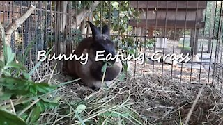 Adorable Bunny Eating Fresh Grass