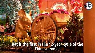 Chinese New Year display at Bellagio
