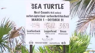 2018 Sea turtle nesting season sees above average numbers