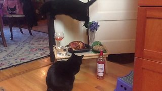 Crazy jumping cat leaps over roast chicken dinner