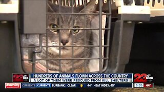 """""""Pilots For Paws"""" saves animals from high-kill shelters"""