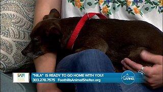 Foothills Animal Shelter- Nila Needs A Home