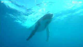 Il sub si fa un selfie con una balena gigante