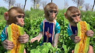 cuteness monkey eating