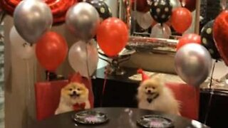 Instagram-famous dog's epic birthday party