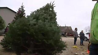 Christmas tree shopping: Aissen Tree Farm keeping busy