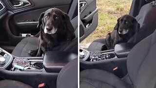 Random dog jumps into woman's car, refuses to leave