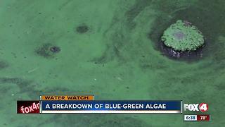 What is blue-green algae?