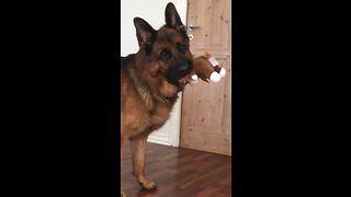 German Shepherd has priceless reaction to crying puppies