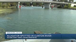 Alligator spotted in the Clinton River