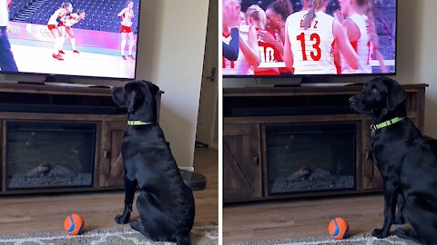 Patriotic pup really gets into the Olympics on TV