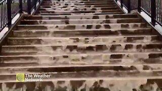 Rainwater cascades down New Brunswick steps