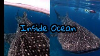 Inside Ocean #shorts