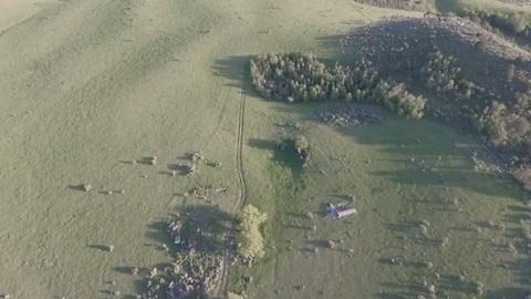 Drone Captures A Weird Wild Animal Running Through Forest