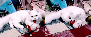Kitten Has No Mercy To Santa Claus Because It's Did not Receive Gift