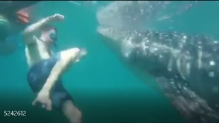 Whale Shark Appears Out Of Nowhere In Front Of A Swimmer