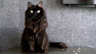 Cat documents everything it has done during lockdown