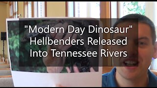 """""""Modern Day Dinosaur"""" Hellbenders Released Back Into Tennessee Rivers"""