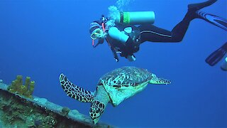 These scuba divers will help you fall in love with the underwater world