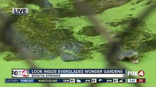 Everglades Wonder Gardens homes rescued animals