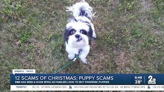 12 Scams of Christmas: Puppy Scams
