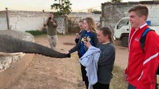 Elephant slams trunk against teen's face