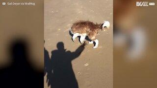 Cane tenta disperatamente di acchiappare un'ombra