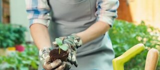 Gardening can improve your mental health