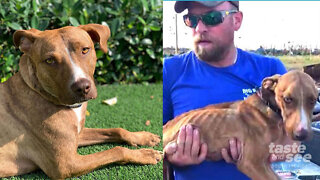 Mini Doc: Miracle Dog makes full recovery
