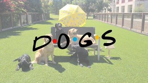 Friends Intro, Dog Edition
