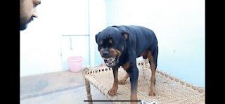Dog training video clip