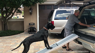 Clever dog teaches puppy how to use ramp