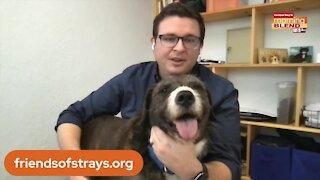 Friends of Strays Animal Shelter | Morning Blend