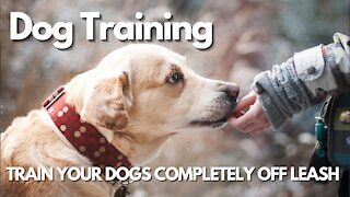 TRAIN YOUR DOGS COMPLETELY OFF LEASH!