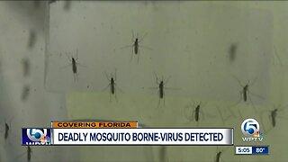 Deadly mosquito-borne virus detected in Florida