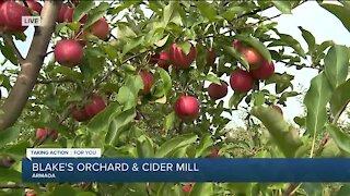 Apple Picking at Blake's Orchard