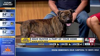 Rescues in Action Oct. 6   Buster needs a buddy