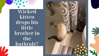 Wicked kitten drops his little brother in the bathtub!