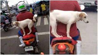Motorsyklist transporterer hun på farligst mulig måte