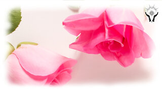 🌹 ENERGY HEALING - ENERGY OF LOVE FOR YOU - MEDITATION & AFFIRMATIONS - FEELING LOVED ATTRACT LOVE