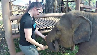 Rescued baby elephant responds with joy to kindness and fruit snacks