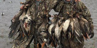 Louisiana Duck Hunting Near Gueydan Louisiana