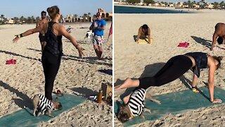French bulldog at yoga workout class